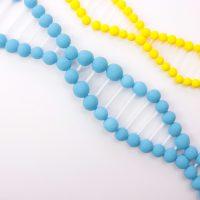 らせん状のDNAの模型